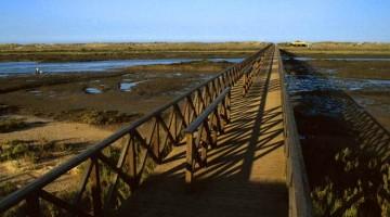 Ria Formosa, entre a ria e o mar
