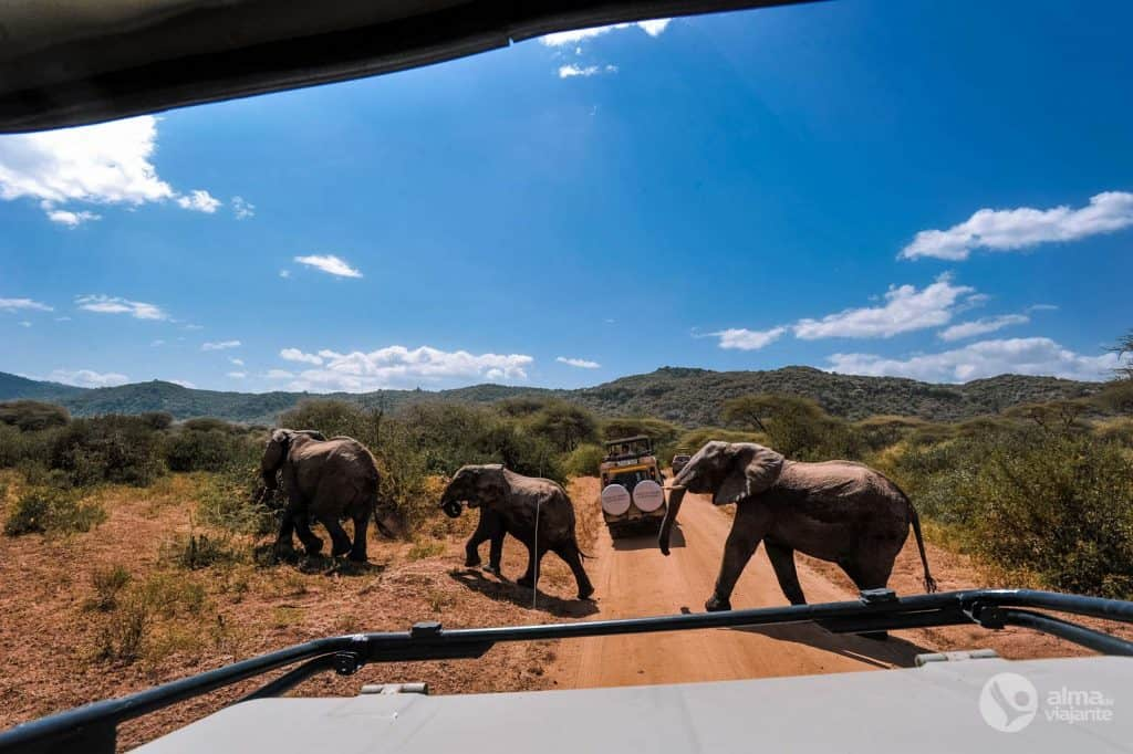 Safari sul lago Manyara