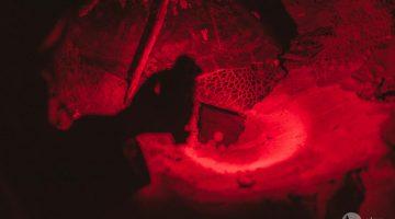 Tartaruga a desovar em Rekawa, no Sri Lanka