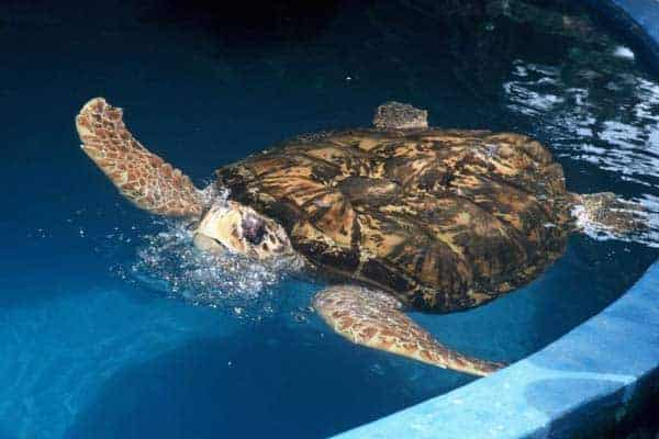 Projecto Tamar, o paraíso das tartarugas