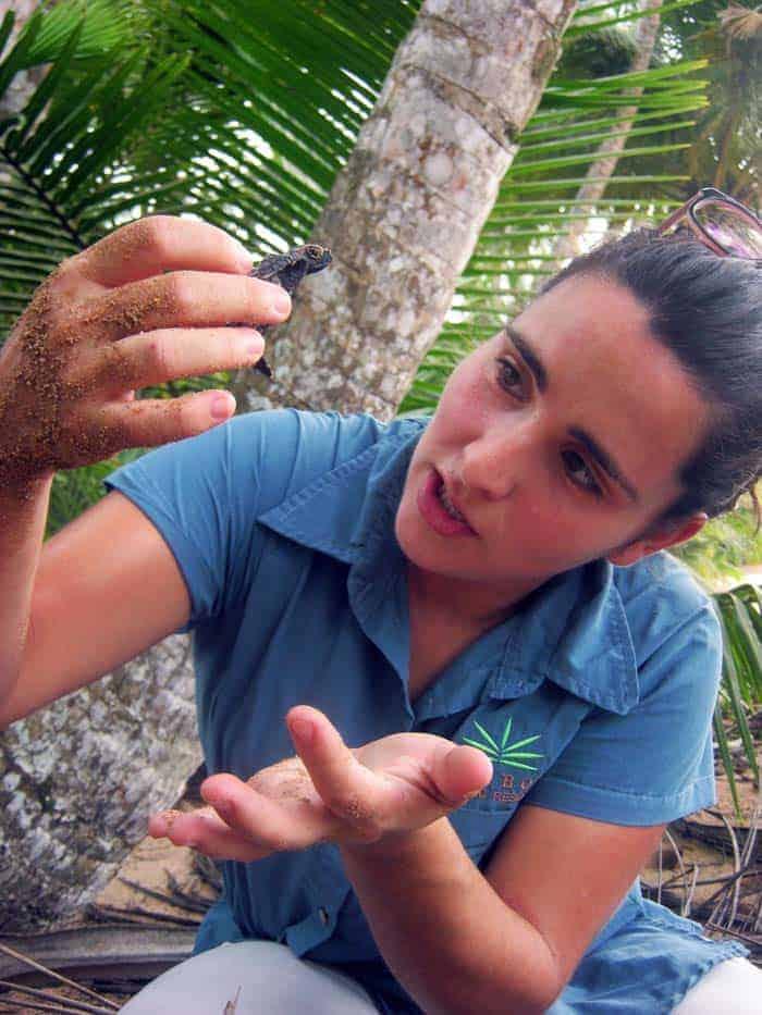 Tartaruga verde, São Tomé e Príncipe