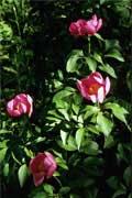 Trekkings e caminhadas: Rosa-albardeira