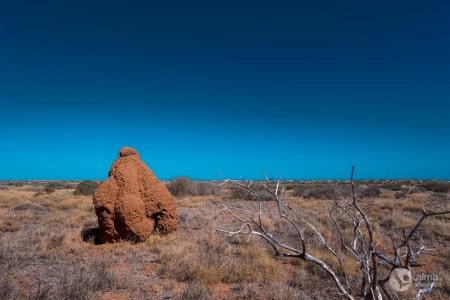 Termiteira gigante, Australia