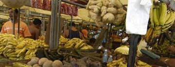 Os Deliciosos Sabores do Pará (VM #62)