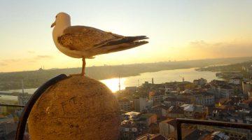 Segredos de Istambul (descobertas felizes)