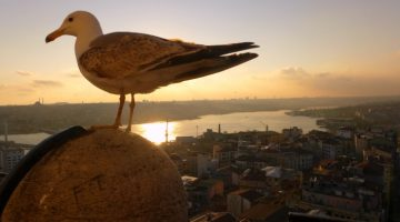 Primeiras impressões de Istambul