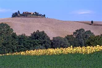 As suaves colinas da Toscana, Itália