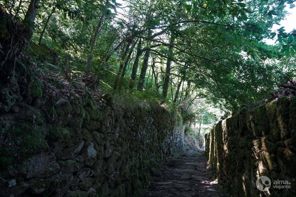 Caminhos de pedra no Trilho dos Socalcos