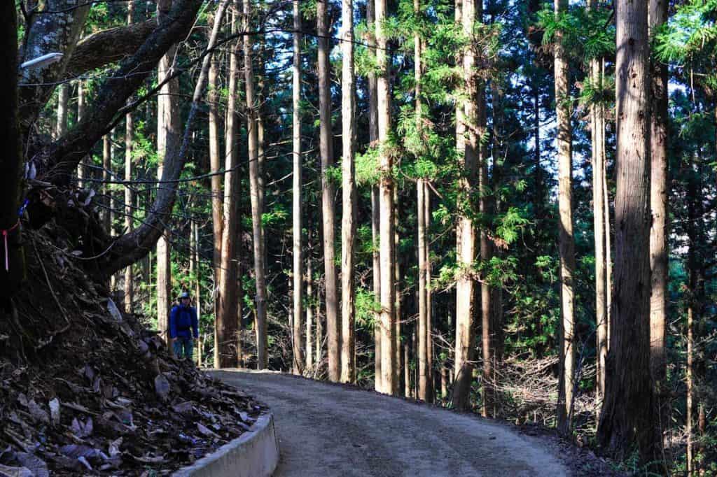 Trilho florestal de acesso ao Parque dos Macacos das Neves (Jigokudani)