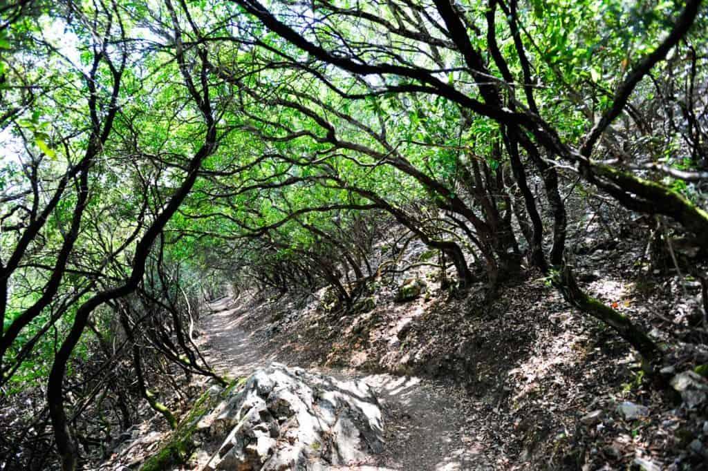 Trilho no Parque Nacional Monfrague