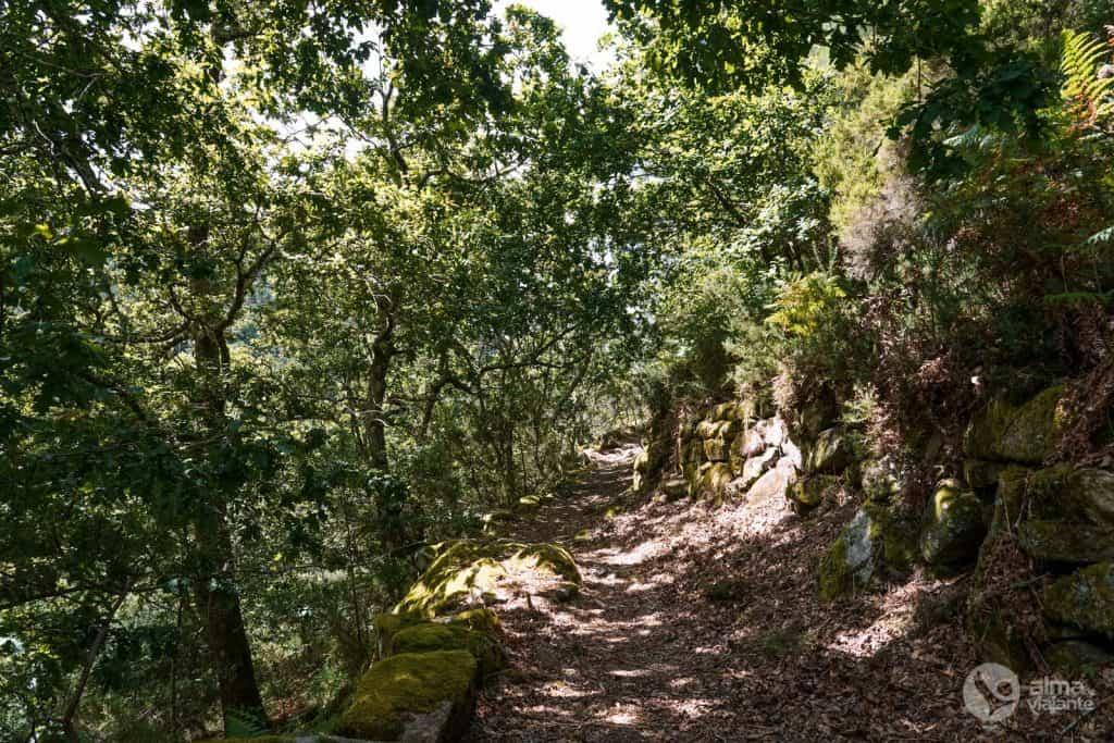 A vegetação no Trilho dos Socalcos