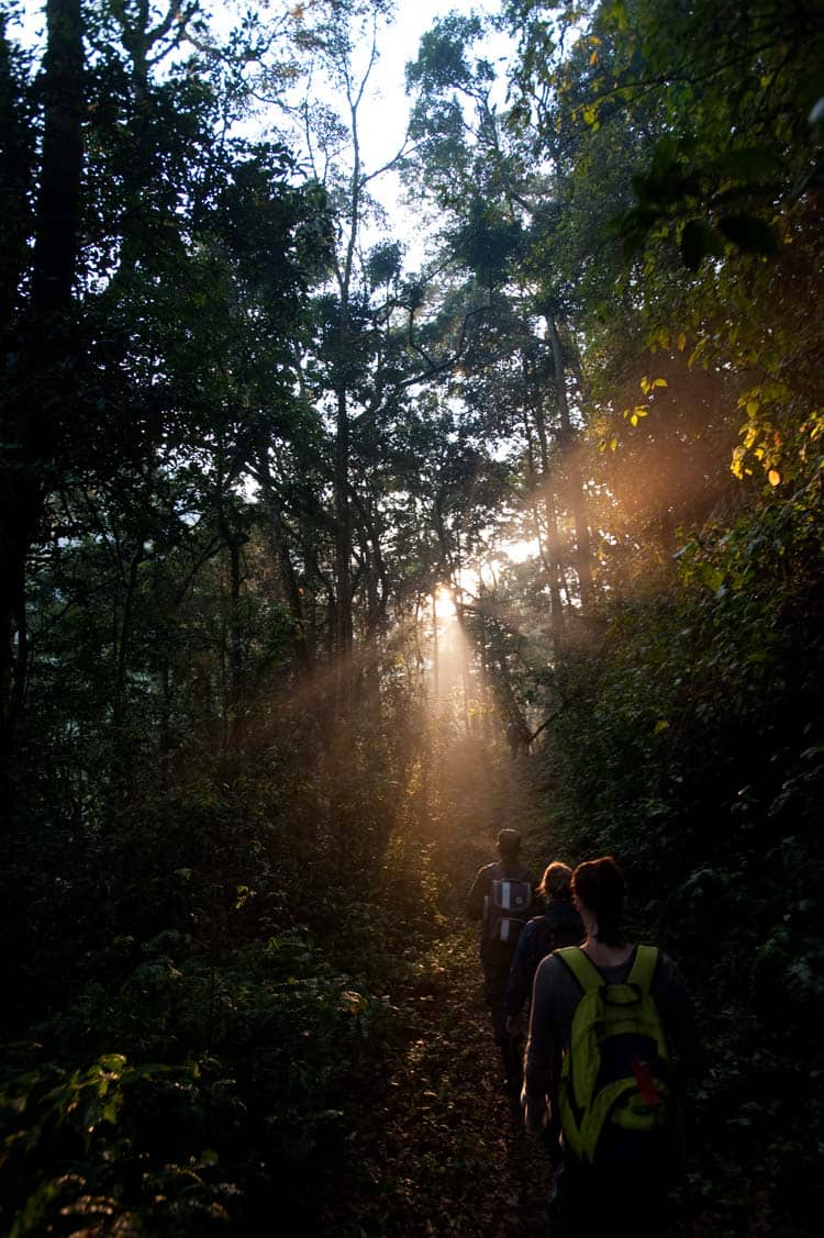 Trekking em Bwindi
