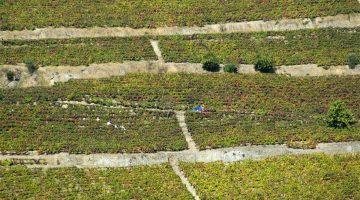 Enoturismo: 5 destinos para assistir às vindimas no hemisfério Norte