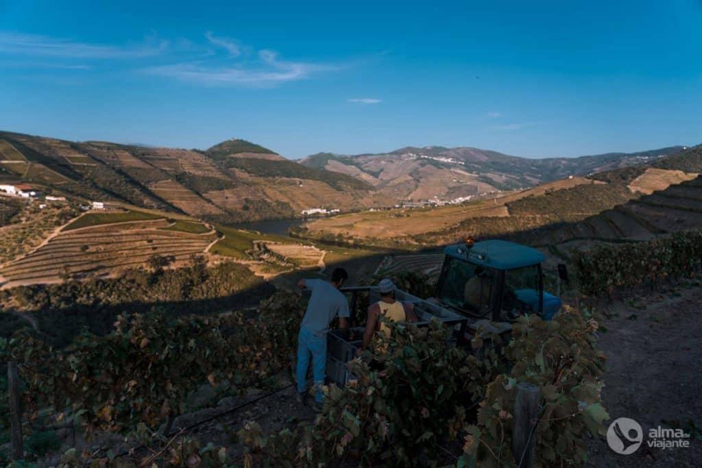 Vindimas no Douro: Quinta de Ventozelo