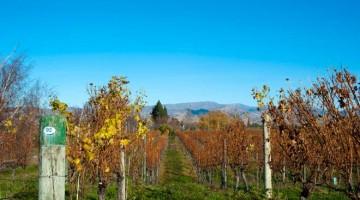 Viagem aos perfumes dos vinhos do novo mundo