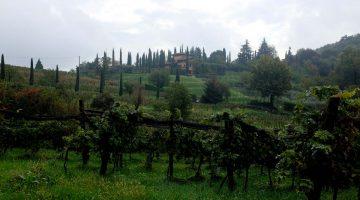 Vinogradi v regiji Scanzorosciaste