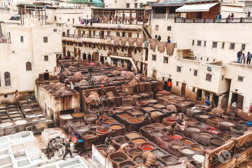 Visiting tanneries Chaouwara, Fez, Morocco