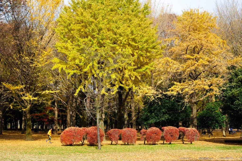 Parque Yoyogi, Tóquio