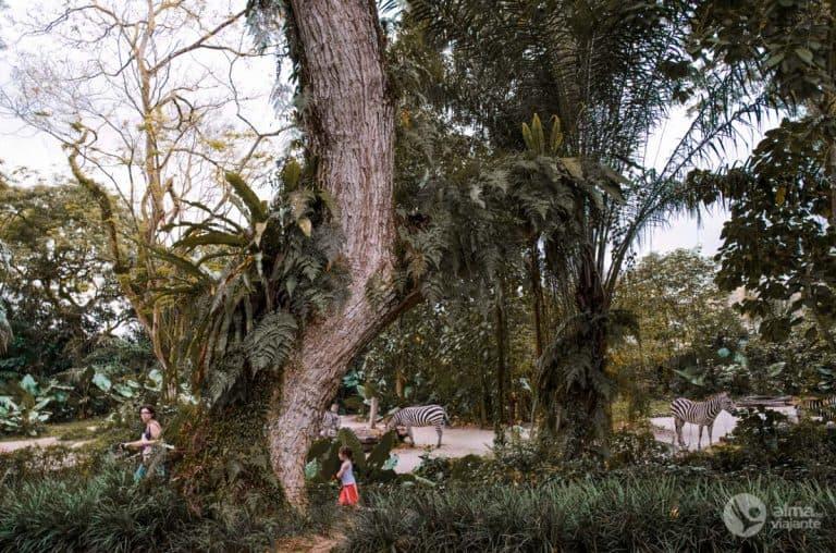 Jardim Zoológico de Singapura